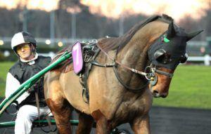 Ultra de Vindecy un cheval du centre est qui pourrait taper fort à Vincennes