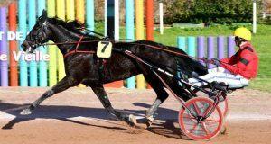 Buzz Mearas cheval du jour de iwin en turf